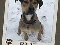 REX's story Rex is a dog with a lot of confidence and
