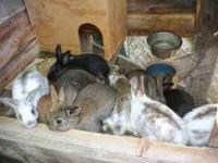 We have 8 weaned Rex cross bunnies for sale. They vary