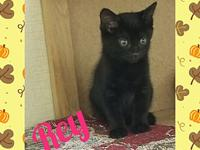 Rey's story Rey is a shy kitten that just needs someone