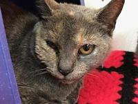 Rhiannon's story Friendly Independent Sweet Shy Picky