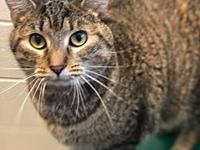 Rhoda's story Rhoda is a 2-3 year old brown tabby we