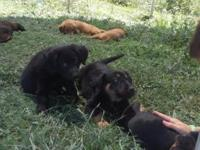 We have 8 beautiful puppies left ready to find their