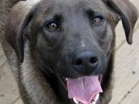 Rhodesian Ridgeback - Lizzie - $75 Adoption Fee!!! -