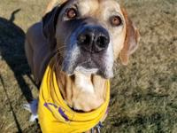 Rhodey is a 7-year-old hound dog mix from the Lewis and