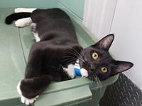 Rhythm's story Rhythm is a friendly 5 month old male
