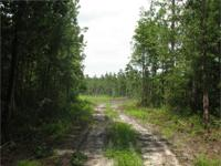 South Bryan Acreage. 29.65 Acres. Richmond Hill, GA .