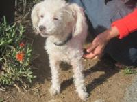 RICKY IS A BICHON BOY ABOUT 4 OR 5 YEARS OLD, NEUTERED