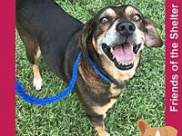 Ricky's story Senior shelter dogs are simply the best -