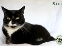 Rico is a beautiful and playful adult female.  She is
