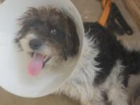 Rico is a 3 year old, 19 lb Havanese mix. Black and