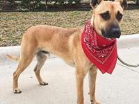 My name is Rico and I'm a one year old Shepherd mix.  I
