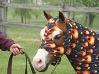 KARLA ALTMANN PERFORMANCE HORSES