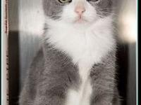 My story **FRAIDY CAT PROGRAM$97.50 FEE INCLUDES: