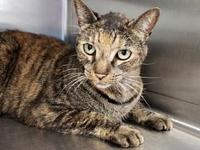 Rikki's story Rikki is a lovable 5 year old female