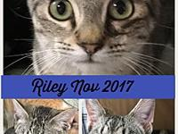 RILEY's story KITTY This sweet kitty need a forever