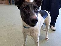 RILEY's story Riley was brought to the shelter on