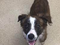 Riley is a super active mini aussie mix that loves to