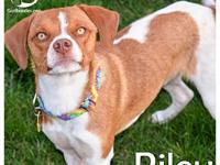 Riley's story Hello! Im Riley! I am about 20 pounds and