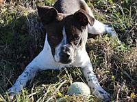Riley's story All dogs adopted from the Animal Care and