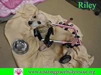Riley's story You can fill out an adoption application