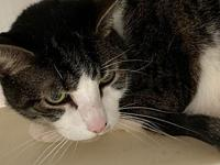 Riley's story Riley is a 7 year old neutered male. He