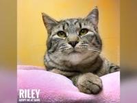 Riley's story Hello there! I'm Riley! I'm friendly,