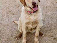 Riley recently joined Labrador Friends of Az as an