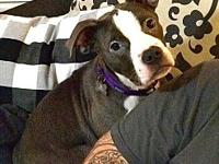 My story Rina is an 8-10 month old, pit mix. She came