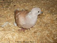 Posting for my son he has a few Ringneck Doves and 3