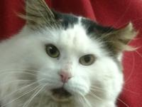 Ringo is a 2 year old neutered male, loves attention