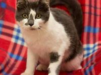 Ringo's story Adoption fee for cats is $65.00 which