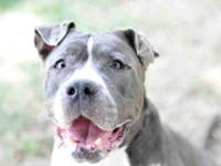 Hi!I''m Rio. I am a staff and volunteer favorite at the