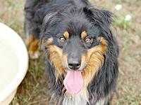 Ripley's story AVAILABLE FOR ADOPTION AT NEWAYGO COUNTY