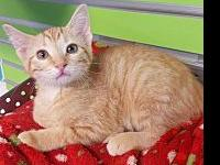 Ripley's story Adoption fee is $75, this kittens approx