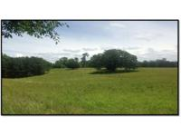 This 147+/- acre tract is just what you have been