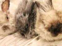 Our bonded group of adorable angora bunnies came from a