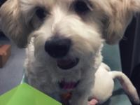 Meet Rita!  Rita is a 4-years-old Maltipoo weighing