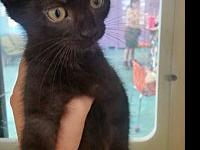 Ritz's story Adoption fee is $75, this kittens approx