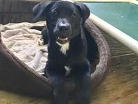 Ritzy's story Big puppy alert! Ritzy is the last of her
