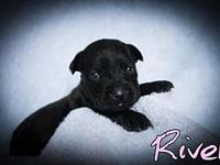 River's story No out of state adoptions. To apply to