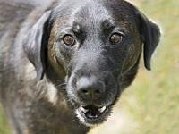 My story Riz is a young 3-5 year old lab mix and is