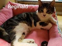 RJ's story Hello, I'm Reginald, a 9 month old, male