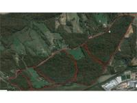 515 Contiguous Acres in Roaring River, NC. with