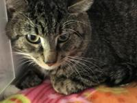 Robin is a 2 to 3 yr old brown tabby cat.  He may be OK