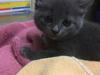 Robin's story Hi! I'm Robin, and I'm a new addition to