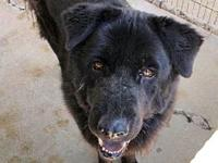 Rocco's story Available to foster or adopt! Breed: Chow