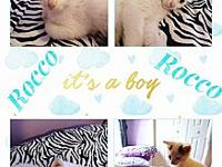 Rocco's story Rocco is a very active kitten, likes to