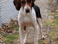 Rocco is a walker hound who is being rescued form