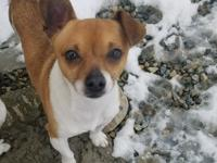 Rocco is an unclaimed stray. He is very adventurous and