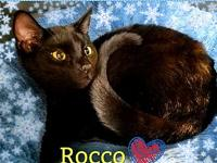 Rocco's story ** Contact info: email